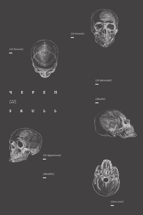 anatomy-book-4